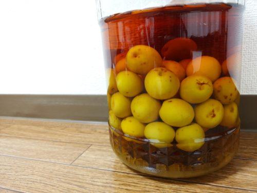 樹齢100年の梅の樹から取れた青梅で梅酒作り