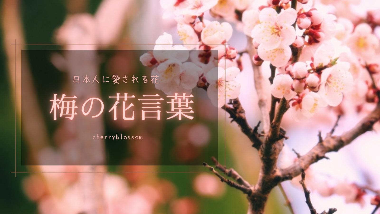 私たちになじみの深い梅の花言葉
